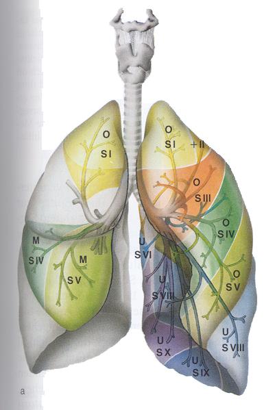 astma problematiek
