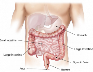 Crohn en Collitis behandeld in het IMC